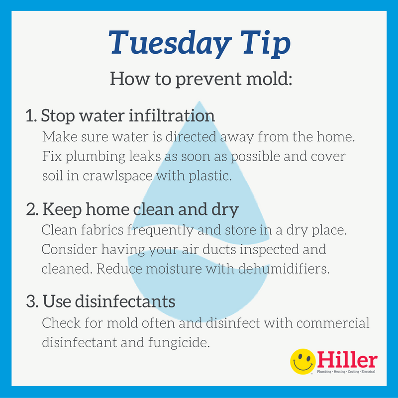 3 mold prevention tips