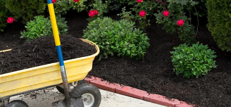 mulch in garden