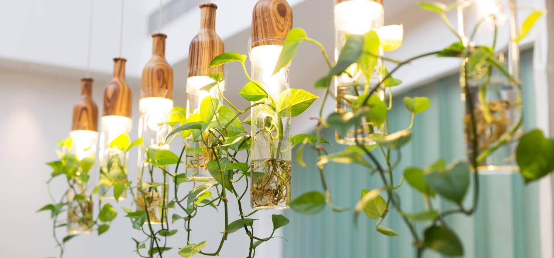proper lighting for indoor plants