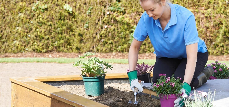 homeowner planting flowers