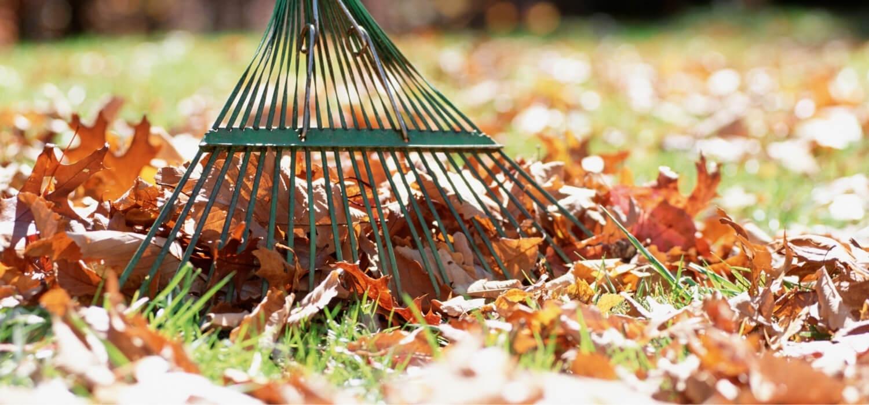 Raking Fall Leaves In Yard